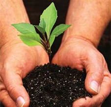 image of two hands holding a sapling in a clod of soil