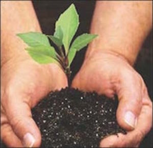 Cover photo for Arbor Day Celebration - Tree Giveaway