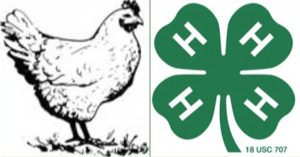 a chicken next to the 4-H logo