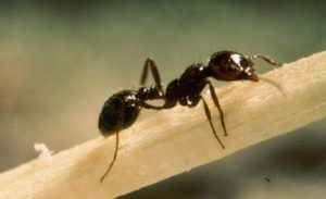 Cover photo for Stopping Fire Ants