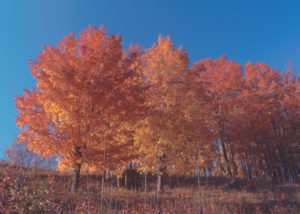 Cover photo for The Colors of Fall