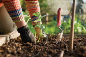 Cover photo for Register for the Extension Gardener Short Course