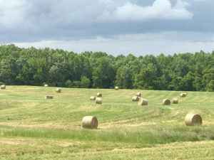 A field full of round hay bales