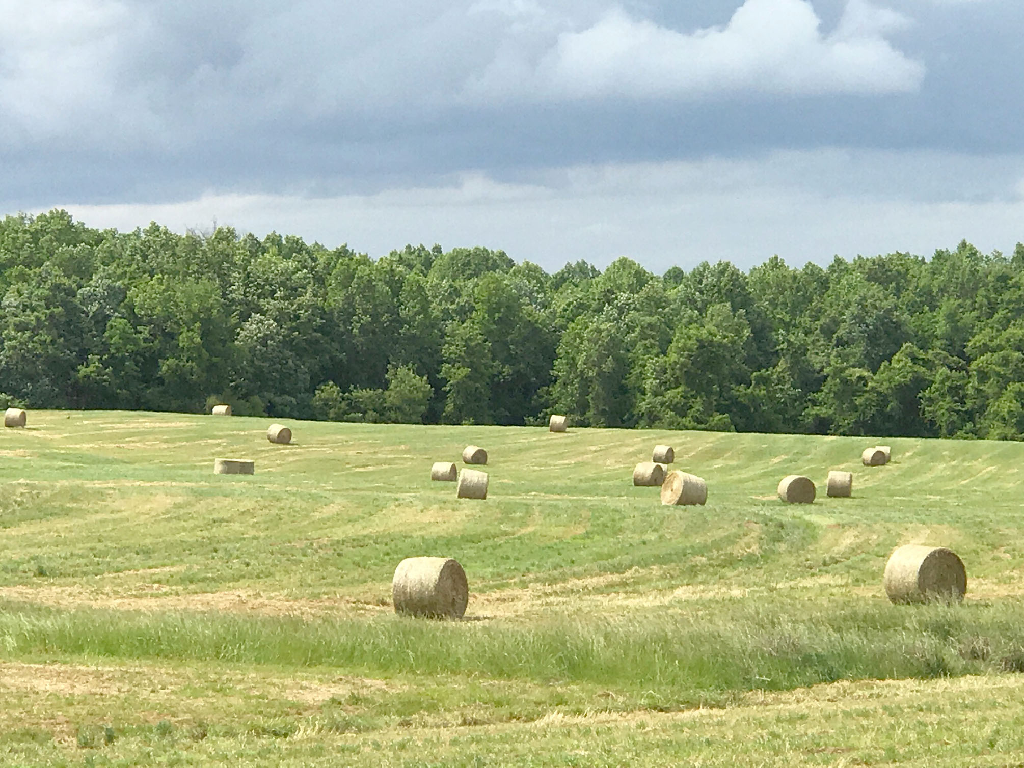 field with many round hay bales