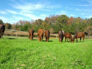 Cover photo for Horse Pasture Management Workshop to Be Held in Alamance County