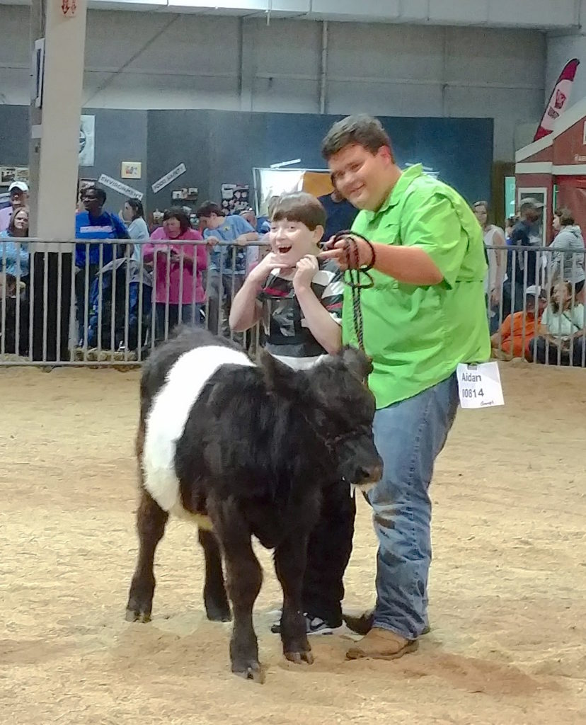 2 4-H youth showing a calf at state fair.