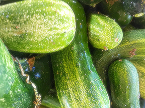 image of several cucumbers
