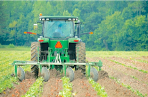 image of a farmer on a tractor in a field of row crops.