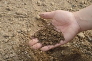 image of a hand holding a handful of soil with soil in the background