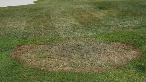 Image of Large Patch in Tall Season Turf.
