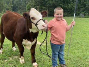 4-H'er showing his cow.