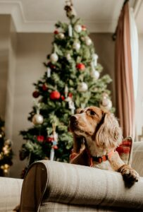 photo of dog on sofa in front of Christmas tree