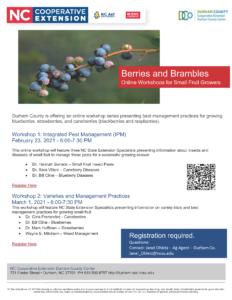 Berries and Brambles Online Workshops Flyer »