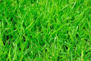 grass-375586_1920 image by Pixabay