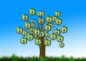 moneybags growing on a tree in a grassy spot and blue sky in background